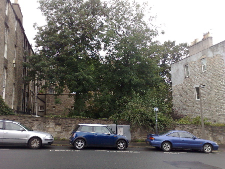 tenement_tree_cars