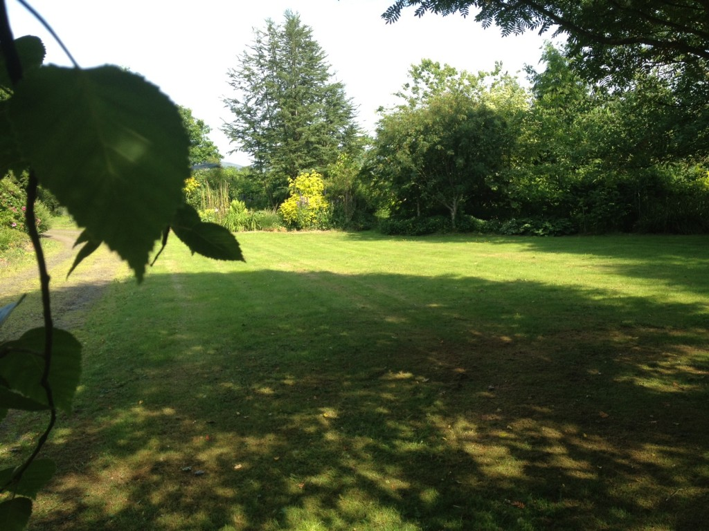 dappled shade on the grass